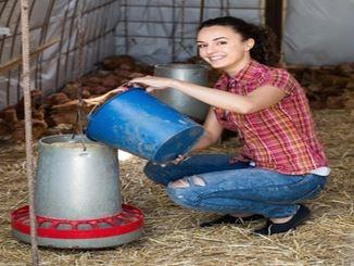 Frau befüllt einen Hühnerfutterautomat